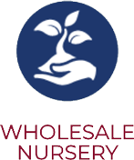 Wholesale Nursery
